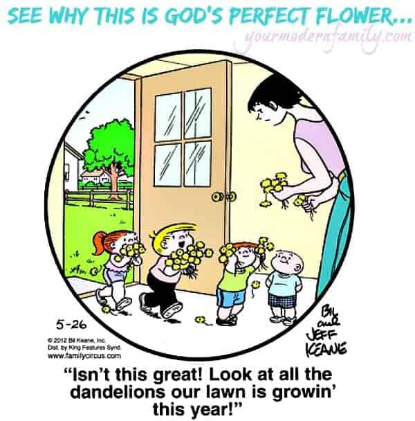 god's perfect flower