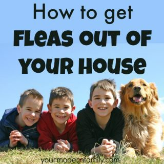 How to get rid of fleas that get into your house