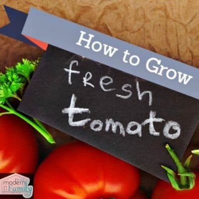 grow best tomatoes
