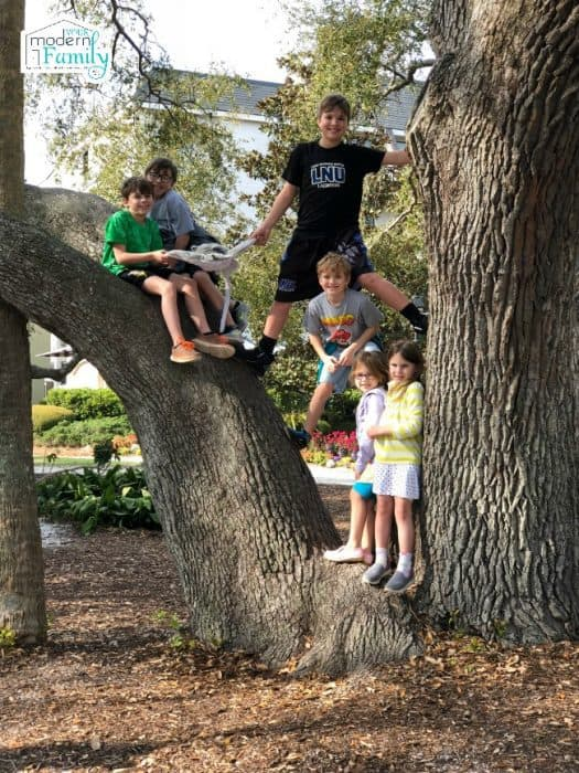 A group of children  posing for a picture in a tree.