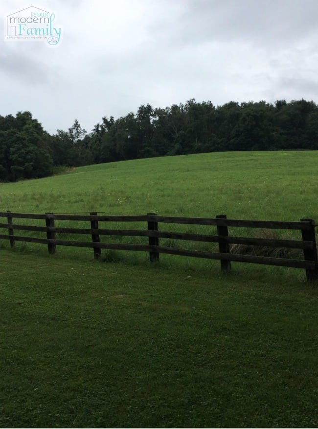 Grass field with a post fence going through it.