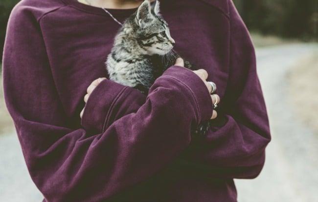 can indoor cats get fleas