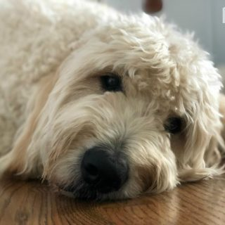 Why Science Says Families Should Get a Dog