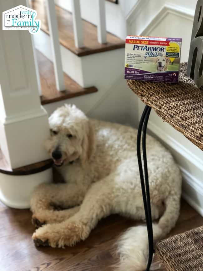 A dog sitting at the bottom of a stair case.