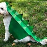 Dog Costume from Box