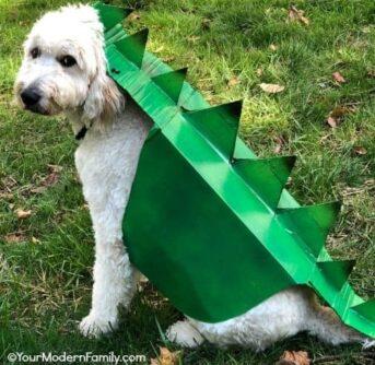 Box Costume for Dog