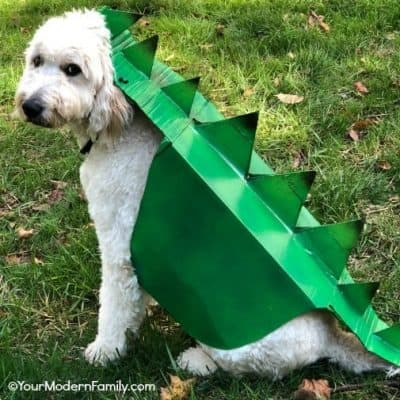 Box Costume for Dog