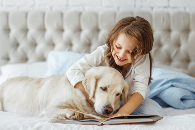 A dog lying on a bed with a girl reading a book.
